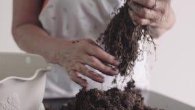 Mensen, het groene ecoinstallatie planten en professioneel botanisch concept die tuinieren - sluit omhoog van de oude gezette han stock videobeelden