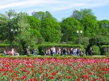Mensen in het park, open plek van tulpen royalty-vrije stock foto