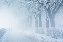 Mensen in mist op sneeuwdijk met bomen stock afbeeldingen
