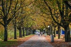 Mensen op de herfstweg met vele bomen royalty-vrije stock afbeelding