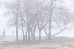Mensen op een leeg de lentestrand op een rivierbank onder bomen foggy stock afbeeldingen