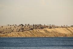 Mensen op het grote zandduin Stock Afbeelding