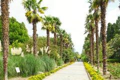Mensen op palmsteeg in nikitsky botanische tuin Stock Foto