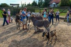 Mensen rond dieren in Kadzidlowo-Park in Polen stock afbeelding
