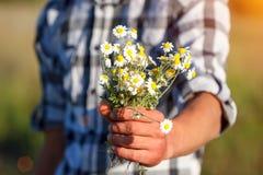 Mensen` s hand die een boeket van madeliefjes, het concept verhouding en liefde houden stock afbeeldingen