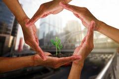 Mensen` s handen rond jonge groene spruiten die op vage stadsachtergrond worden geïsoleerd met zacht zonlicht stock fotografie
