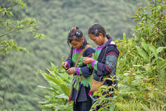 Mensen van Sa-Pa in Vietnam Stock Afbeelding