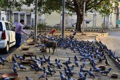 Mensen voedende troep van duiven op de straat Royalty-vrije Stock Afbeeldingen