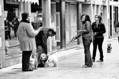 Mensen wuth honden Royalty-vrije Stock Afbeeldingen