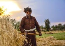 Mensenarbeider het oogsten tarwe Royalty-vrije Stock Afbeelding