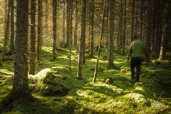Mensengang in bemost groen bos royalty-vrije stock afbeeldingen