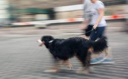 Mensenlooppas met zijn buiten hond Stock Afbeeldingen