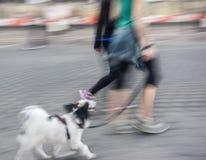 Mensenlooppas met zijn buiten hond Royalty-vrije Stock Fotografie