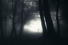 Mensensilhouet in geheimzinnig bos met mist Royalty-vrije Stock Afbeeldingen