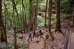 Mensenstijgingen in het regenwoud van Jamison Valley Blue Mountains royalty-vrije stock afbeeldingen