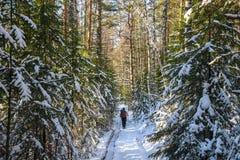 Mensenwandelaar met rugzak die in de winter sneeuw boslandschap reizen Actief vakanties openluchtconcept Stock Fotografie