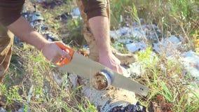 Mensenzaag die de boom snijden stock video