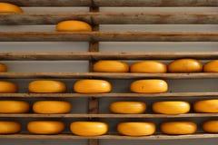 Mensole con formaggio Immagine Stock