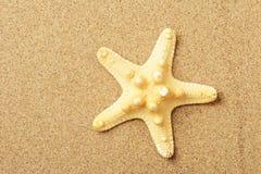 Mensonge d'étoiles de mer sur le littoral Photographie stock libre de droits