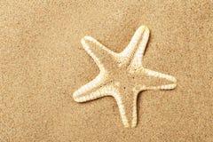 Mensonge d'étoiles de mer sur le littoral Images stock