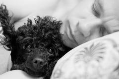 Mensonge d'homme et de chien sur un oreiller Image stock