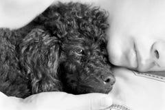 Mensonge d'homme et de chien sur un oreiller Photos libres de droits
