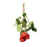 Mensonge d'isolement trois par roses au-dessus de la surface blanche Photographie stock