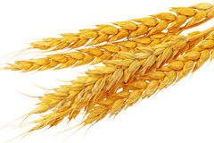 Mensonge d'oreilles de blé.  D'isolement sur le fond blanc Image stock