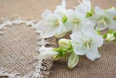 Mensonge de campanule de fleurs blanches sur le coeur du tissu brut Images libres de droits