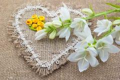 Mensonge de campanule de fleurs blanches sur le coeur du tissu brut Photographie stock