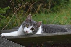 Mensonge de chat Image libre de droits