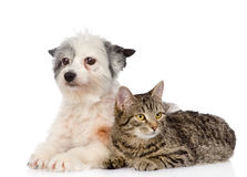 Mensonge de chat et de chien tout près D'isolement sur le fond blanc Photos libres de droits