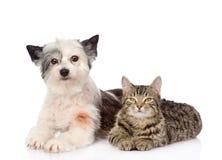 Mensonge de chat et de chien tout près D'isolement sur le fond blanc Photo stock