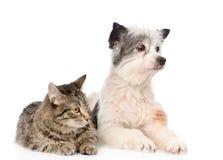 Mensonge de chat et de chien tout près D'isolement sur le fond blanc Photographie stock libre de droits