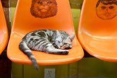 Mensonge de chat sur la chaise Photo libre de droits
