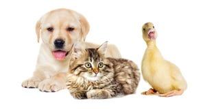 Mensonge de chaton et de chiot Images stock