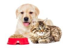 Mensonge de chaton et de chiot Photos stock
