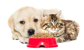 Mensonge de chaton et de chiot Images libres de droits