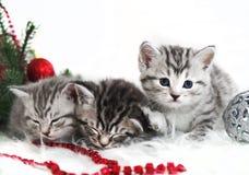 Mensonge de chatons sous l'arbre de Noël Photos stock