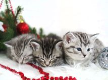 Mensonge de chatons sous l'arbre de Noël Photographie stock libre de droits