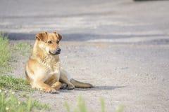 Mensonge de chien Photos libres de droits