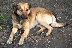 Mensonge de chien Photo libre de droits