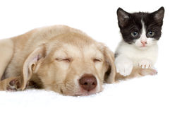 Mensonge de chiot et de chaton Image stock