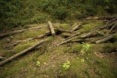 Mensonge de Chips Logs dans la forêt photos stock