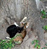 Mensonge de deux chats sous un arbre Jour sans abri international d'animaux Images stock
