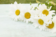 Mensonge de marguerites sur une surface en bois Photo stock