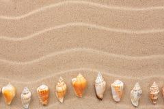 Mensonge jaune de coquille sur le sable Images stock