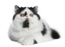 Mensonge noir et blanc de chat persan Photos libres de droits