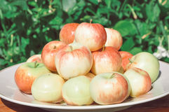 Mensonge rouge de pommes d'un plat Image stock