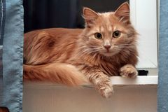 Mensonge sur le chat d'attache d'hublot Photo libre de droits